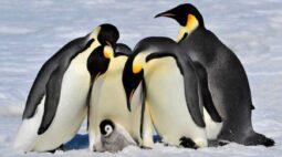 Dia dos pais: vem conhecer quem são os paizões do reino animal