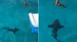 Mulher dá de cara com tubarão após pular na água; assista ao vídeo!
