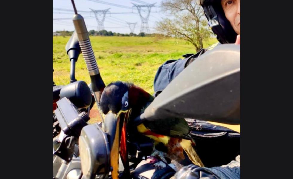 Tucano surpreende ao 'pegar carona' em motocicleta de policial no oeste do Paraná