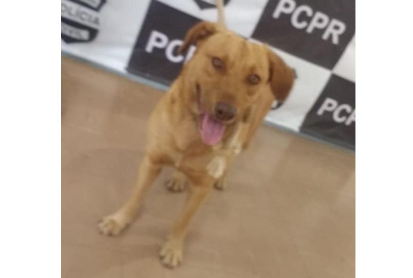 Homem que estuprava cachorros é preso em flagrante na Grande Curitiba