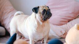 8 dicas para evitar que o seu cão faça xixi pela casa toda