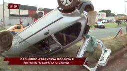 Motorista capota carro após desviar de cachorro na rodovia