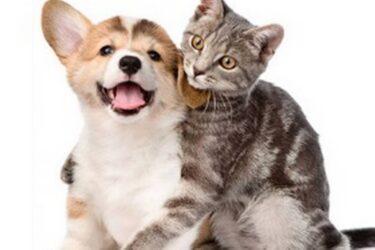 Com a hashtag #AdoteUmCV, campanha incentiva a adoção de cães e gatos