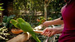 Visitantes do Parque das Aves podem alimentar periquitos no maior viveiro de aves do Brasil