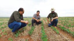 Rally de Produtividade mostra técnicas e boas práticas na produção de soja