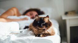 Por que os gatos gostam de dormir em cima da gente na cama?