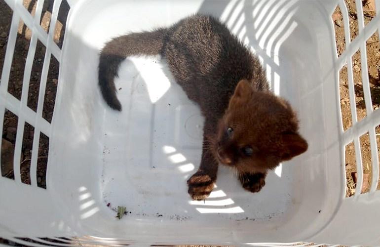 Animal silvestre ameaçado de extinção é resgatado em Londrina