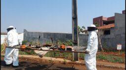 Trabalhadores são atacados por enxame de abelhas escondido em bueiro