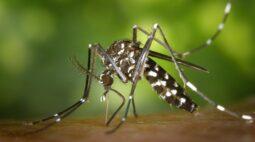 Primeiro caso de chikungunya de 2020 é confirmado em Londrina