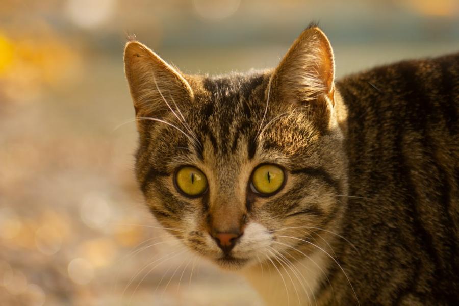Cegueira em cães e gatos: é possível prevenir?