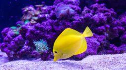 10 dicas para ter um aquário  sem prejudicar o bem-estar dos peixinhos
