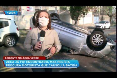 Acidente no Água Verde: cachorro foi encontrado mas polícia procura motorista que provocou a batida