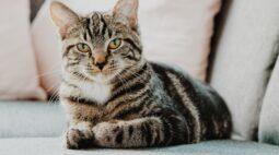 Clínica Catfriendly: conheça os benefícios para você e para o seu gato