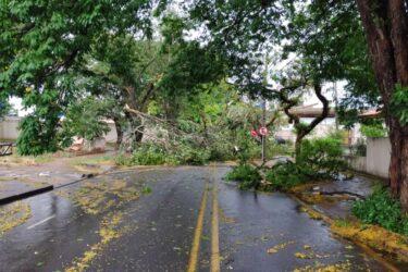 Estragos da chuva: Com rajadas de vento a quase 100 km/h, mais de 30 árvores caíram em Maringá