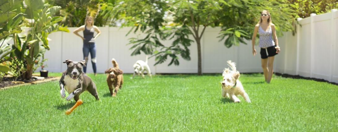 Seis dicas para escolher um hotel para seu cão