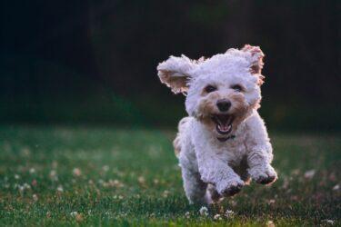 Conheça quatro benefícios do selênio orgânico nas rações para pets