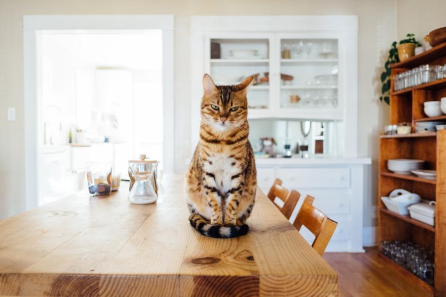 Tutores de animais de estimação devem ficar atentos a produtos de limpeza