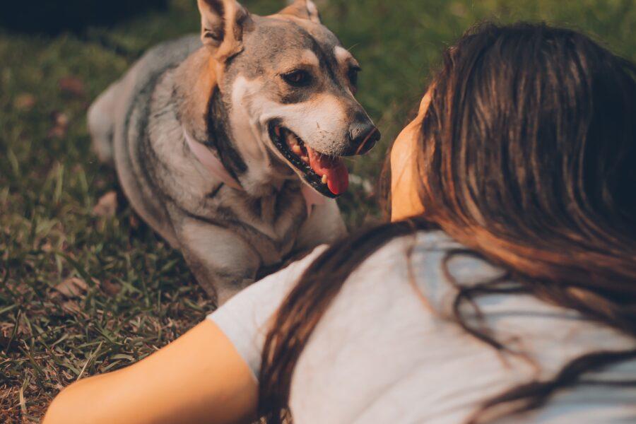 A ciência e o poder terapêutico da interação humano-animal