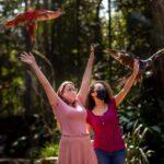 Parque das Aves tem feriado marcado pela retomada da visitação