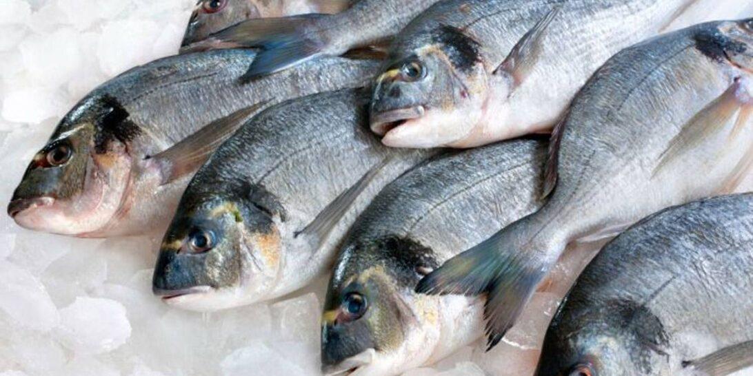 Pacote de peixe do Brasil testa positivo para coronavírus; China suspende importação