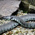 Jovem picado 8 vezes pela mesma cobra em um mês afirma que é perseguido pelo animal