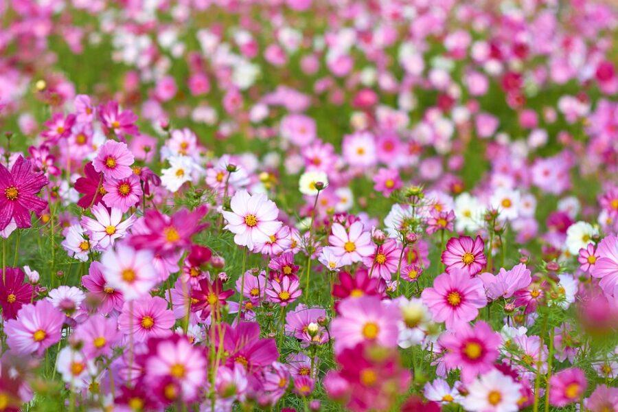 Primavera: quando começa, características e flores da época