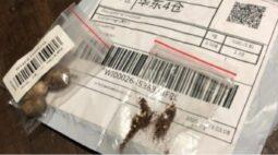 Governo do Paraná alerta sobre sementes misteriosas da China