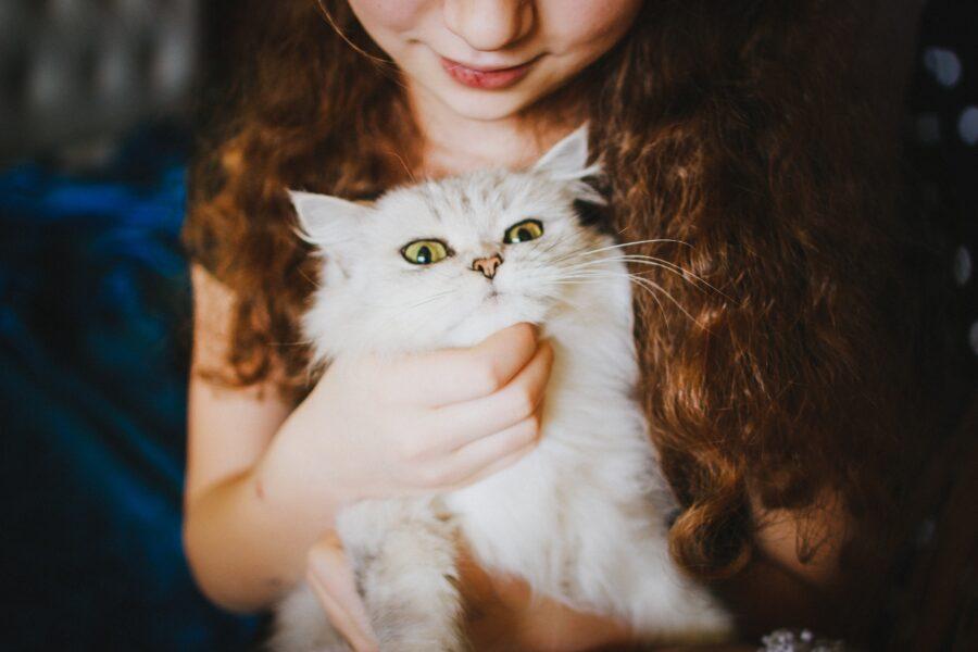 Mudança de rotina em casa e cuidados com os felinos
