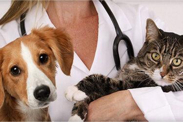 O que faz o Médico Veterinário?