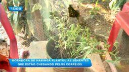 Moradora de Maringá plantou as sementes que estão chegando pelos correios