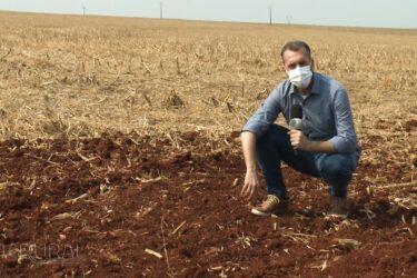 Atraso no plantio de soja pode atrapalhar milho safrinha