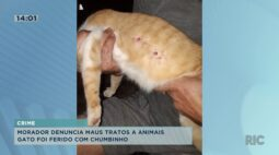 Morador denuncia maus-tratos a gato vítima de arma de chumbinho