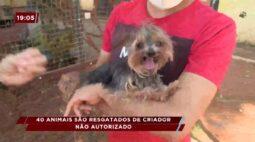 Animais são resgatados de criadouro não autorizado