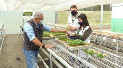 Atraso no plantio afeta as sementes? | RALLY DE PRODUTIVIDADE