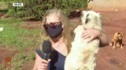 Câmeras registram cachorrinha sendo abandona na estrada
