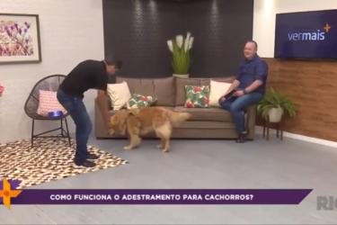 Como funciona o adestramento para cachorros?
