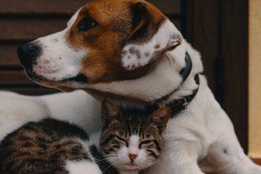 UFPR recruta cães e gatos com tutores para estudo sobre Covid-19