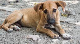 Abandono de animais dispara na pandemia
