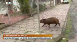 Cidade Alerta Paraná Ao Vivo | 30/10/2020