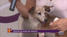 Saiba como prevenir câncer de mama em cachorras e gatas