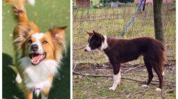 Famílias pedem ajuda para encontrar cachorras que fugiram em Curitiba
