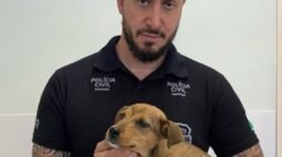 Polícia encontra filhote de cachorro com vidro no ânus, em Campo Largo