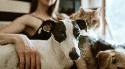 Curitiba vence o Prêmio Cidade Amiga dos Animais