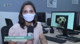 Aplicativo ajuda a achar cachorros perdidos em Maringá