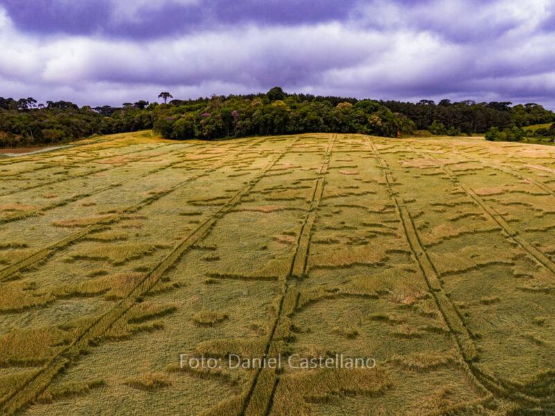 Extraterrestres? Agroglifos aparecem em propriedades rurais de São José dos Pinhais