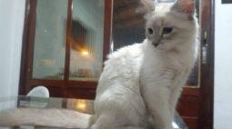 Gato é o primeiro animal do Brasil que testa positivo para o novo coronavírus