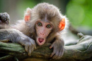 Entretenimento com animais silvestres traz riscos à saúde, diz ONG
