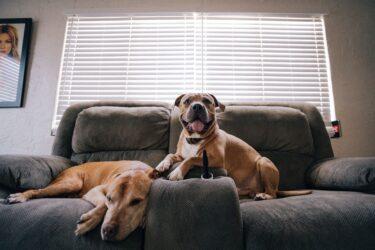 Como preparar seu pet para a chegada de um novo bicho de estimação