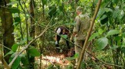 Corpo é encontrado em mata na zona norte em Londrina