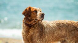 10 dicas para aliviar o calor do seu cachorro nos dias quentes